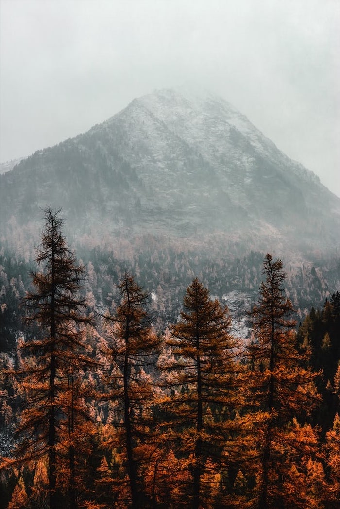 mountain landscape, free desktop backgrounds, mountain peak covered with fog, tall trees at the forefront