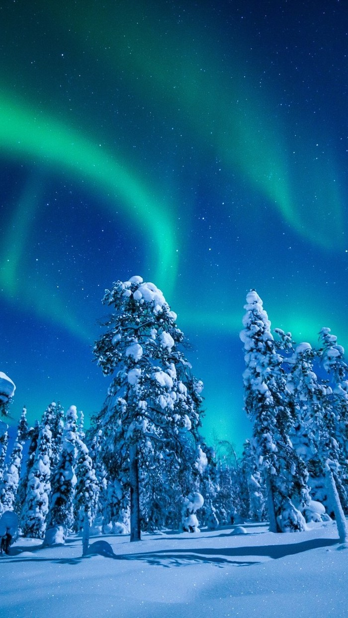 northern lights in the sky, desktop backgrounds, over tall trees covered with snow
