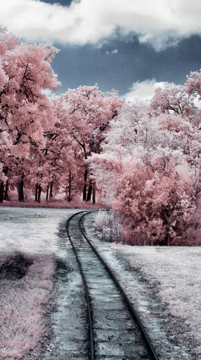 rail road going through a forest, free wallpapers for android, tall trees covered with snow
