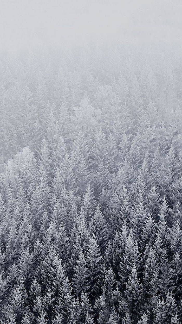 tall trees covered with snow, fog looming over them, free wallpapers for android, shades of grey aesthetic