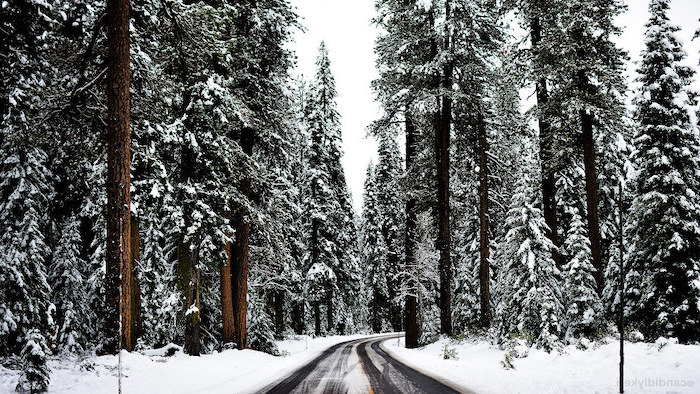 pathway going through a forest, winter screensavers, tall trees on both sides, covered with snow