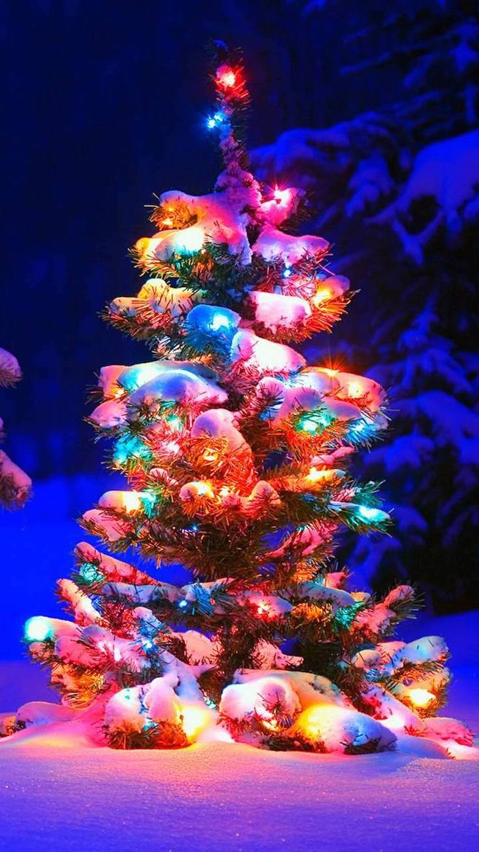 tree covered with snow, decorated with colorful lights, desktop backgrounds, snow covered ground