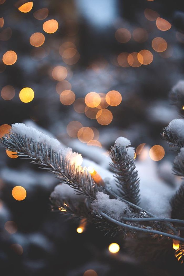 cool computer backgrounds, tree branches covered with snow, lights intertwined with them, blurred lights in the background