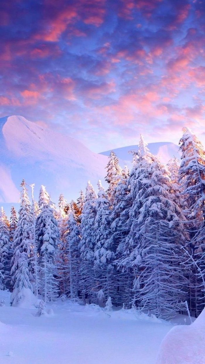 mountain landscape at sunrise, tall trees covered with snow, desktop backgrounds, mountain peak in the background