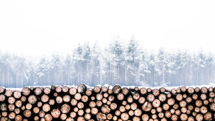 wooden logs arranged together, winter screensavers, tall trees in fog, covered with snow in the background
