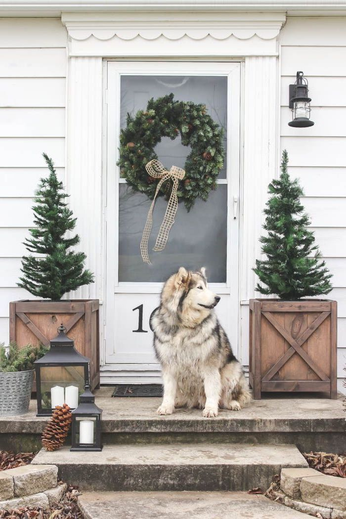 wreath on white door, two trees in wooden crates, dog standing on the stairs, outdoor christmas decorations ideas