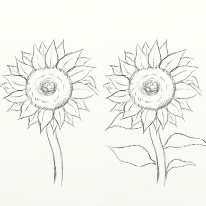 how to draw a sunflower, easy animals to draw, step by step diy tutorial, black and white pencil sketch on white background