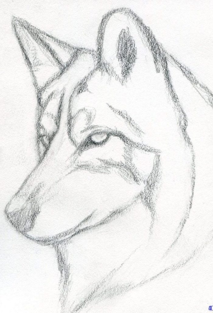 husky dog portrait, black and white pencil sketch, how to draw cute things, white background