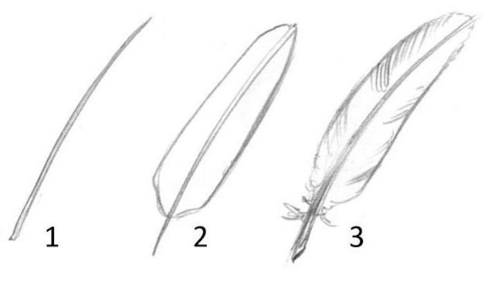 step by step diy tutorial, how to draw a feather, cute drawing ideas, black and white pencil sketch on white background