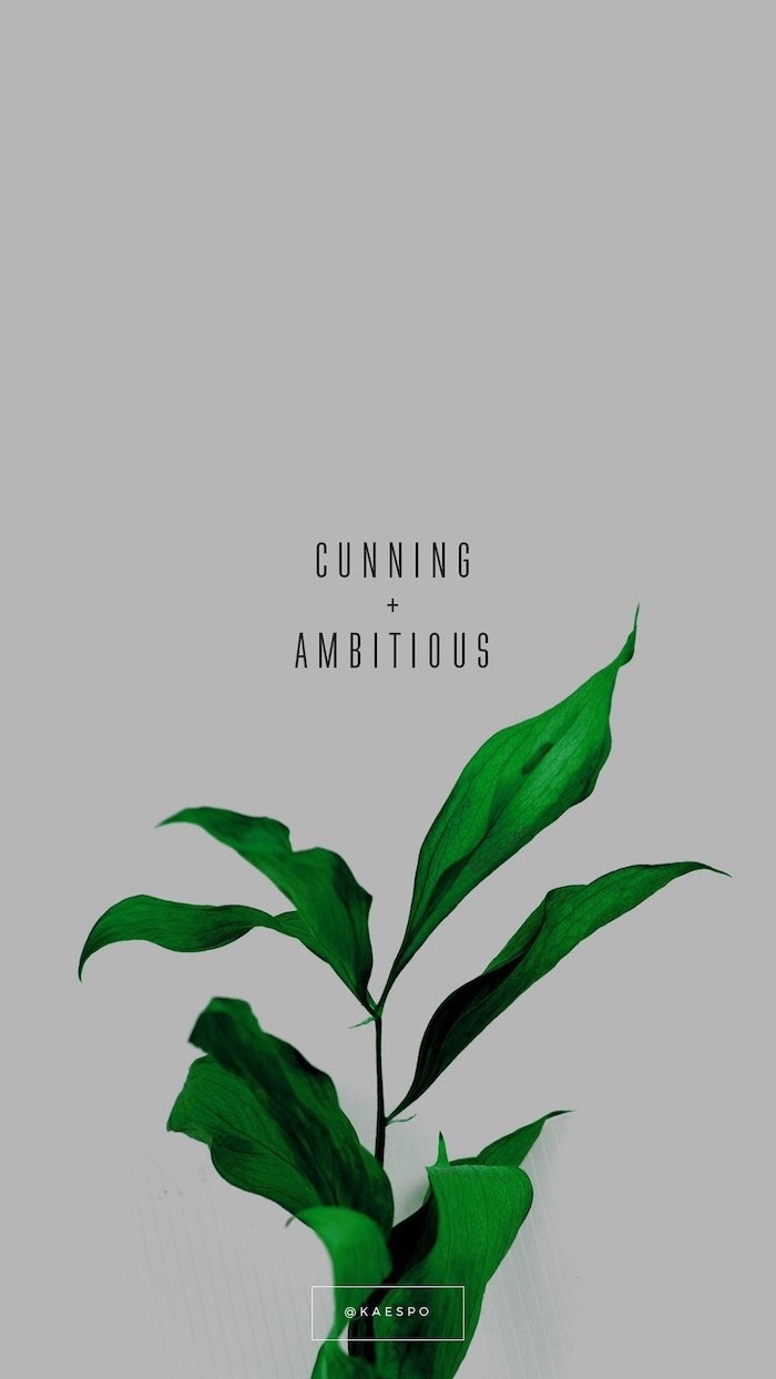 cunning and ambitious, written over grey background, pinterest wallpaper, above green plant, aesthetic phone backgrounds