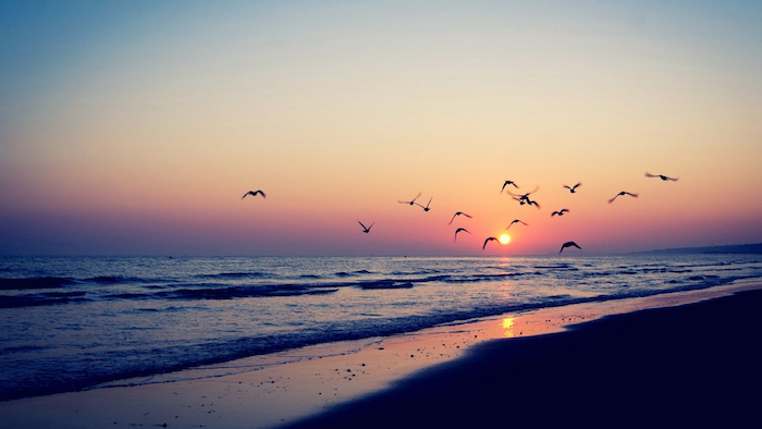 a flock of birds, flying over a beach at sunset, aesthetic desktop wallpaper, waves crashing into the beach