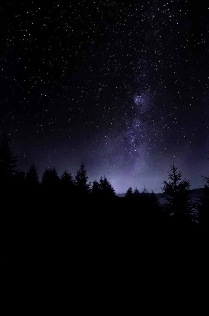 dark sky filled with stars, above a dark forest with tall trees, forest landscape, photographed at night