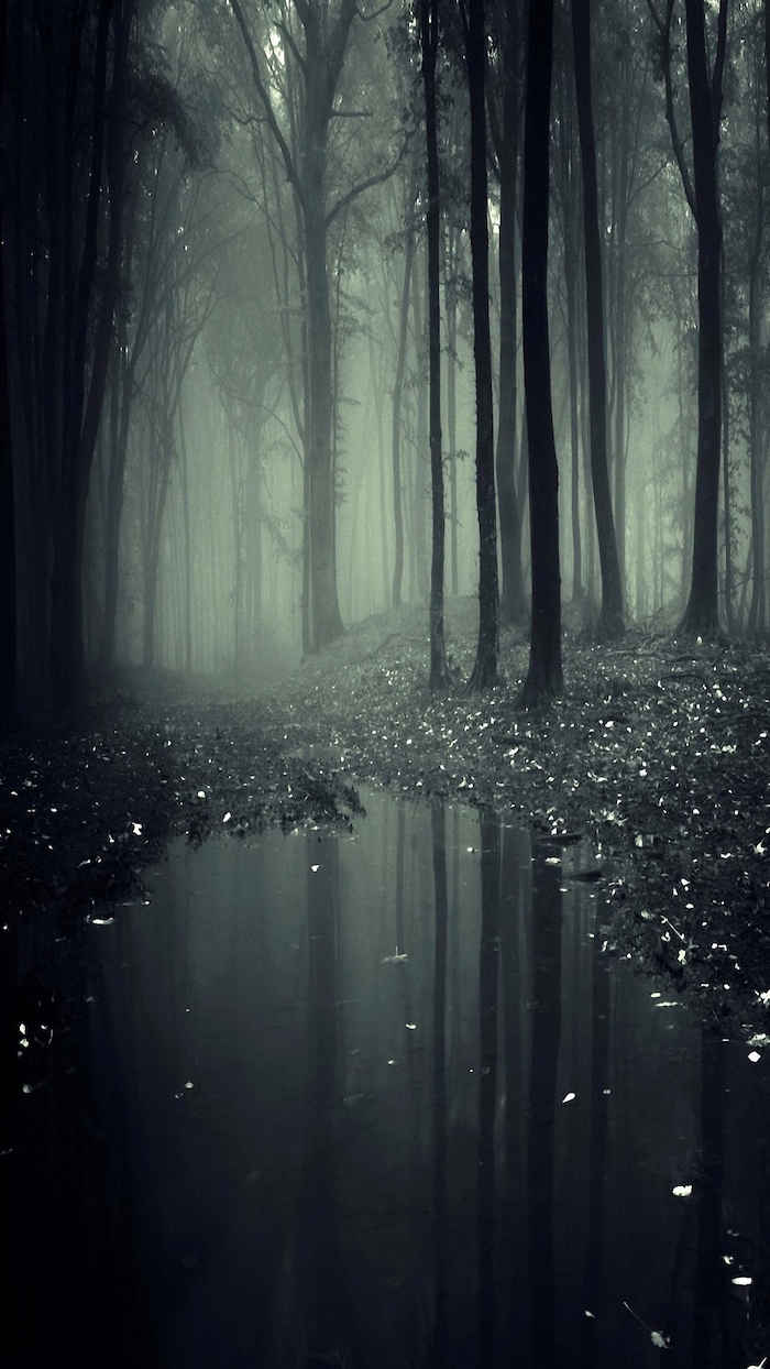 forest landscape covered with fog, cute aesthetic backgrounds, tall dark trees, mirrored in a puddle of water