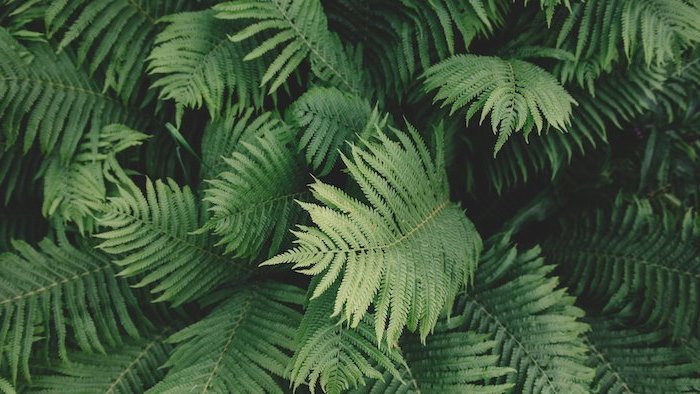 green plant, photographed up close, aesthetic phone wallpapers, green aesthetic