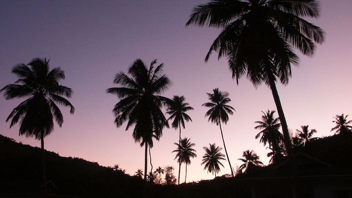 palm trees appearing black, photographed at sunset, aesthetic phone backgrounds, sky in purple pink colors