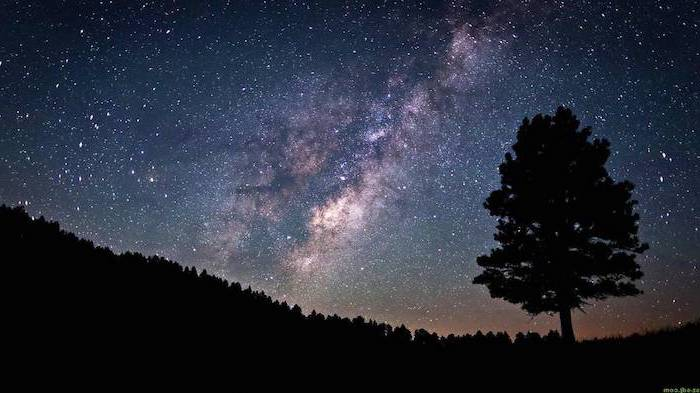 forest landscape with a tall tree at the forefront, sky filled with stars above the trees, galaxy phone wallpaper
