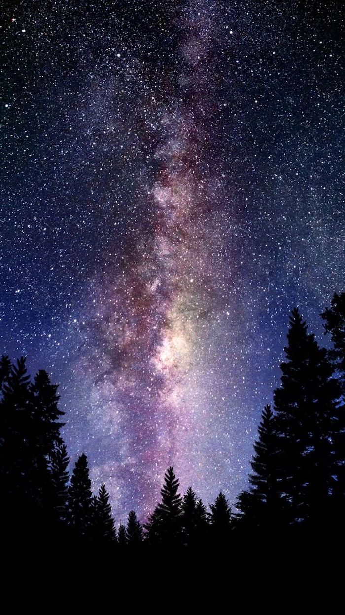 dark forest landscape with tall trees, space desktop backgrounds, sky filled with stars above the trees