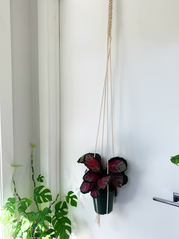 dark green ceramic pot hanging from the ceiling, white wall in the background, macrame plant hanger tutorials