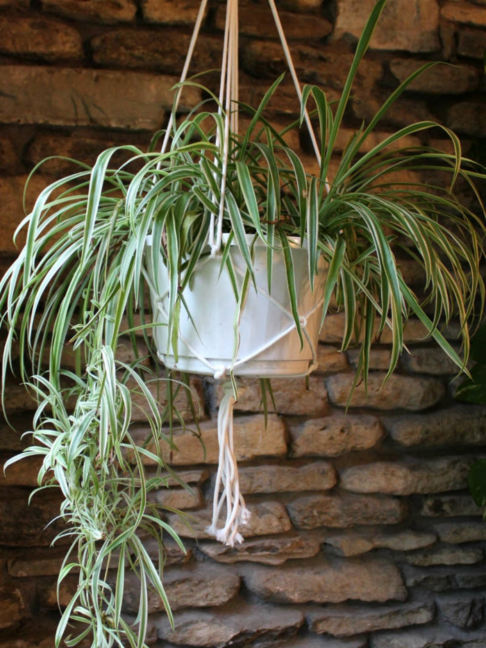 large plant in white plastic pot, hanging from the celing, macrame plant hanger diy, stone wall in the background