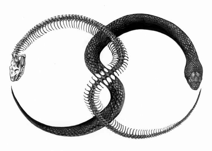 black drawing on white background, snake eating its own tail, snake and snake skeleton intertwined