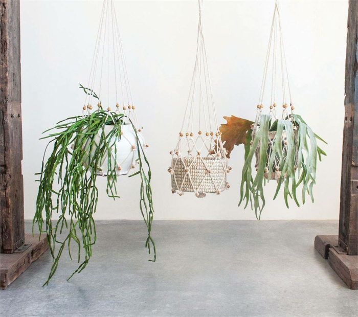 easy macrame plant hanger, three different plants, hanging from the ceiling, white wall in the background