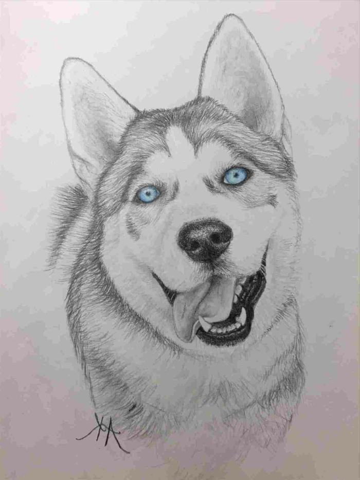 drawing of a husky with blue eyes, what to draw when bored, black pencil drawing on white background