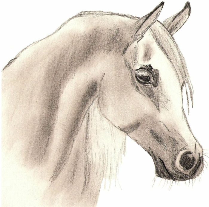 drawing of a horse head, how to draw easy, pencil sketch on white background