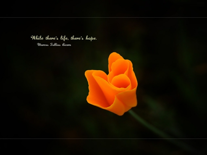 background photo of orange flower, quotes about hope and love, marcus julius cicero quote