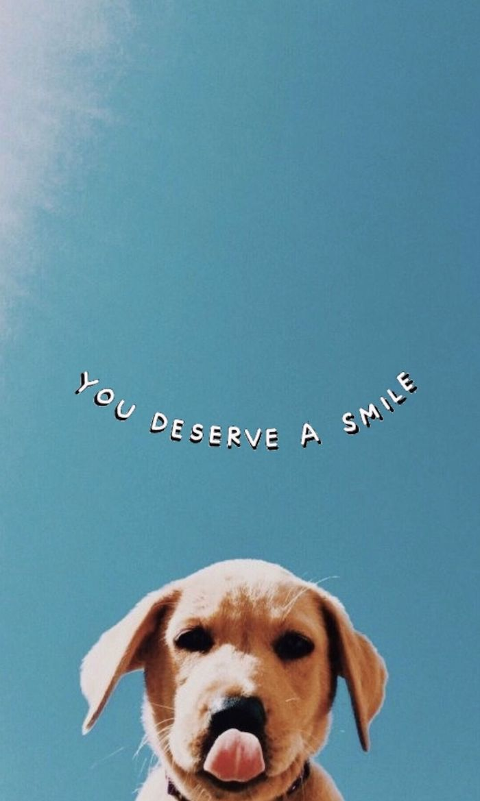 cute dog photo you deserve a smile written above it cool laptop wallpapers blue sky with sunshine