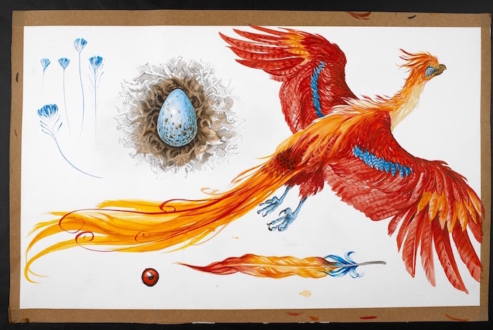fawkes the phoenix, colored drawing, hogwarts drawing, white background, colorful feather