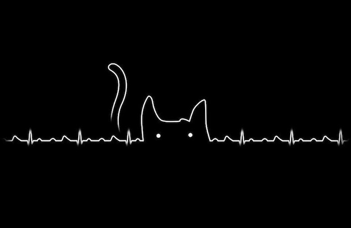 heartbeat line funny screensavers white cat outline on black background