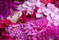 Choose a Floral Background to Decorate Your Screen With