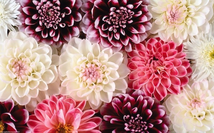 close up photo of flower arrangement watercolor floral background white pink purple flowers