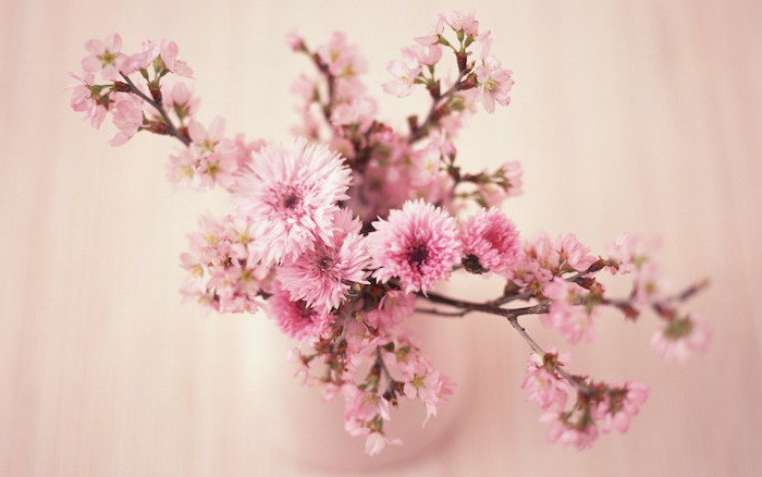 close up photo of pink cherry blossoms on tree branches inside a vase pink background watercolor floral background
