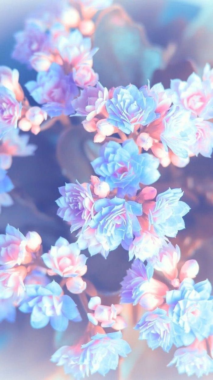 close up photo of white pink small flowers blossoms floral background blurred background behind them