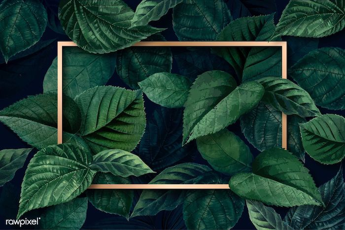 drawing of dark green leaves cute iphone wallpaper gold frame in the middle dark aesthetic