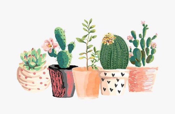 drawing of watercolor potted succulents cute iphone wallpaper pots in orange pink black white background