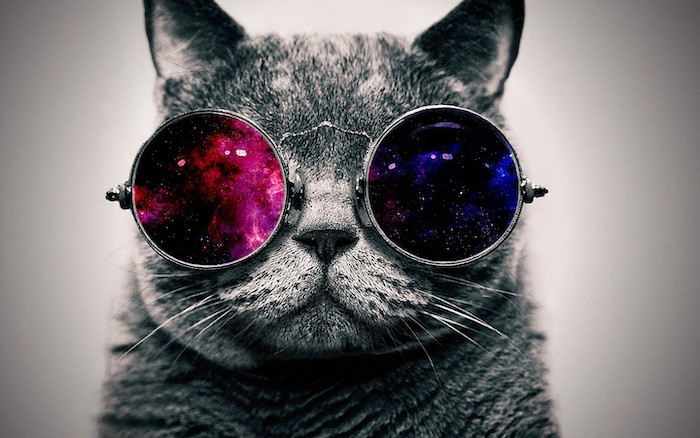 photograph of grey cat wearing glasses cool wallpaper hd pink and purple blue and black galaxies in the glasses