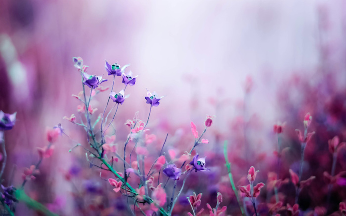 purple and pink flowers cute wallpapers for girls blurred background in pink and purple