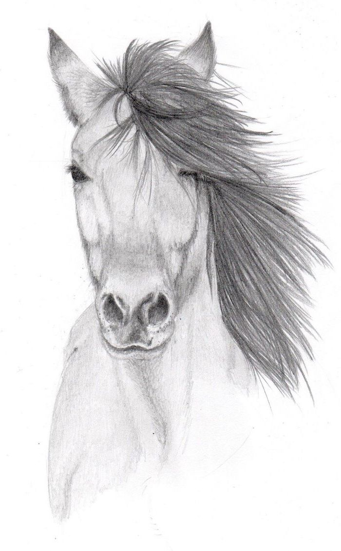 black pencil drawing of horse head with long mane how to draw animals white background