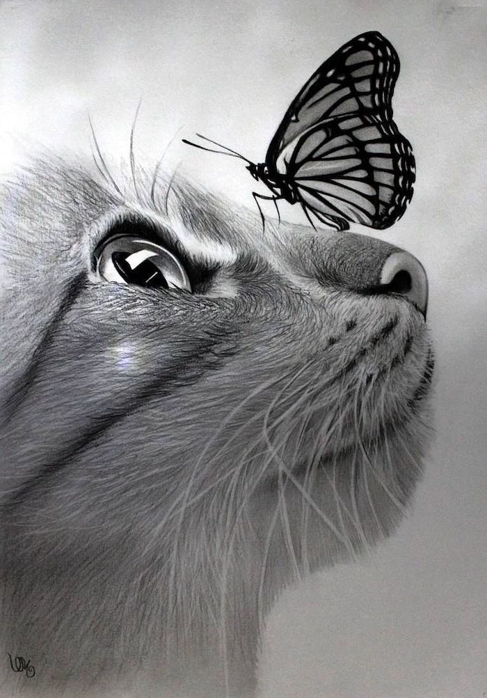 cat pencil drawing with butterfly on its nose realistic animal drawings made with black pencil and shading