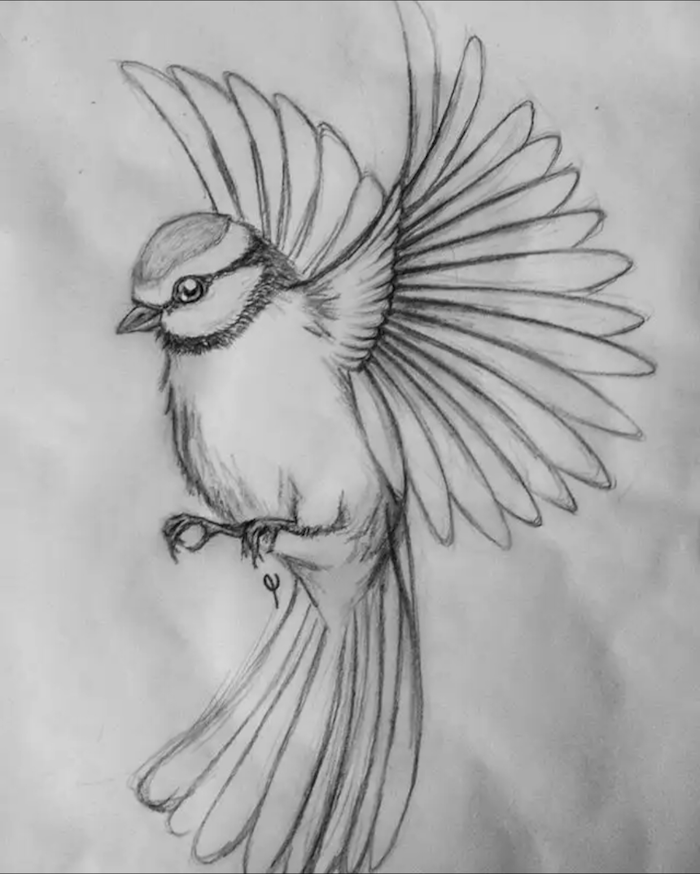 cute animal drawings easy black pencil sketch on white background with bird flying wings spread