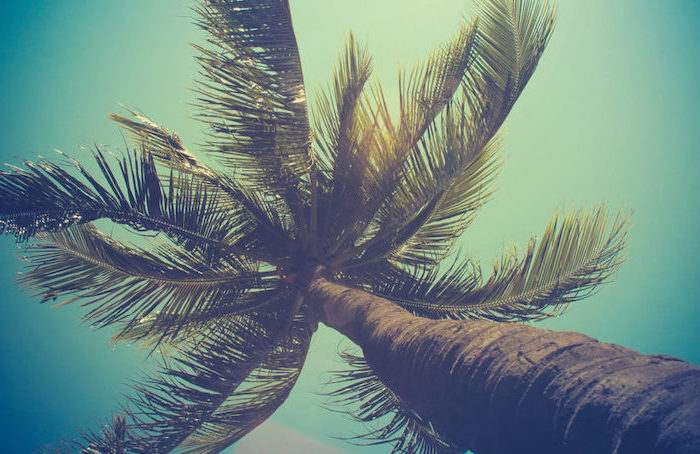 cute wallpapers for computer tall palm tree photographed from underneath blue sky behind it