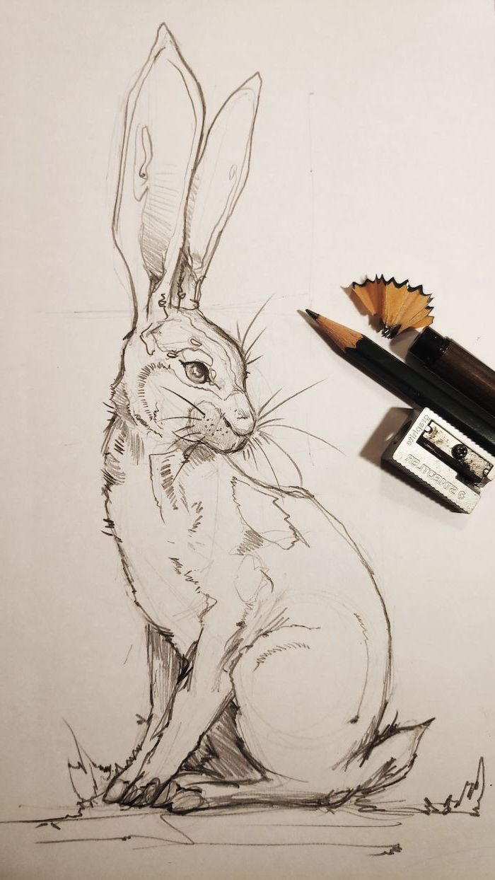 drawing of a rabbit with long ears easy animals to draw black pencil sketch on white background