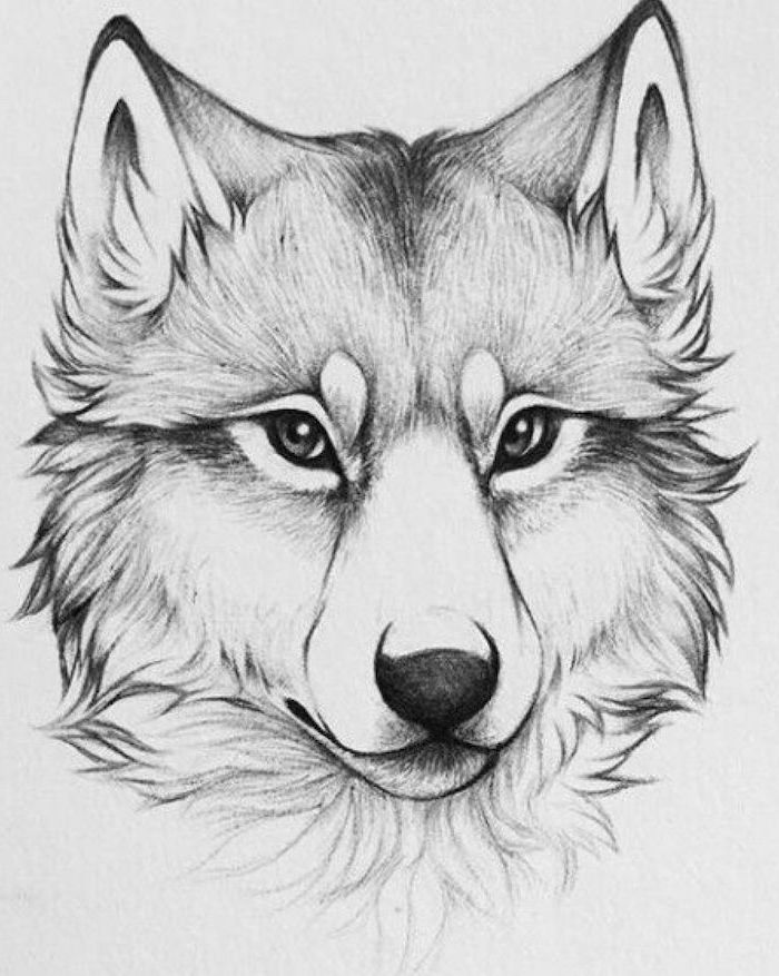 drawing of a wolf head how to draw animals easy black pencil sketch on white background