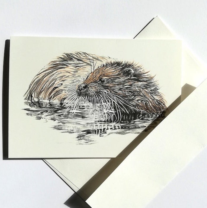 drawing of an otter in the water how to draw animals step by step realistic drawing on white background