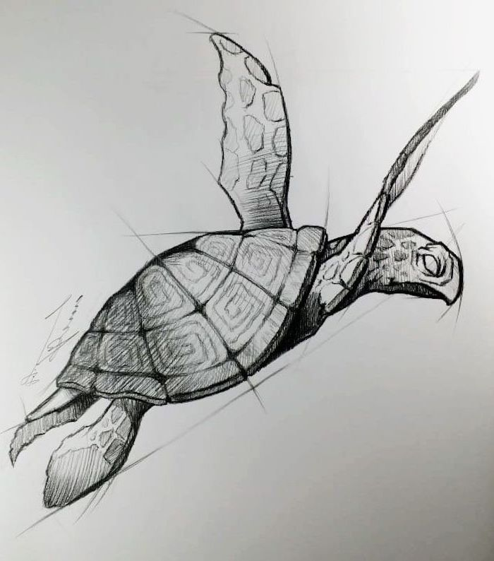 drawing of tortoise in water black pencil sketch easy animal sketches white background