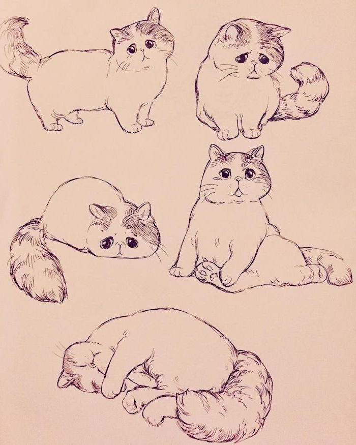 drawings of a cat in different poses how to draw animals easy black pencil sketch on white background sad looking cat