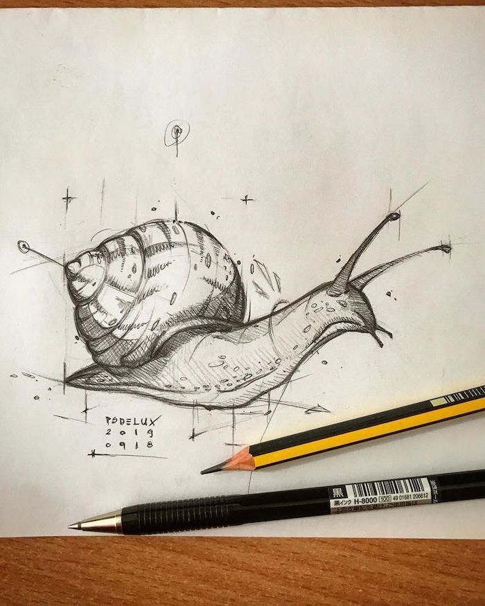 easy animal sketches black pencil drawing on white background of snail with absract lines