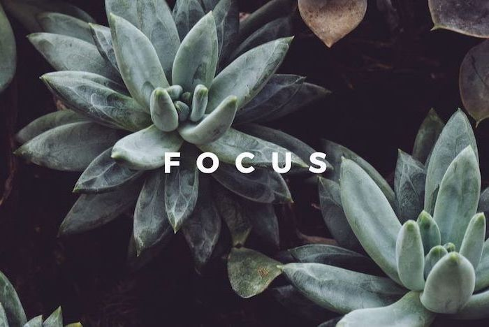 focus written with white letters desktop backgrounds on top of background close up picture of succulents